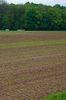 ungleicher Feldaufgang im Anbaujahr 2014
